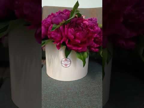 ПИОНЫ В ШЛЯПНОЙ КОРОБКЕ — ЦВЕТЫ ДНЕПРОПЕТРОВСК | Закажите доставку цветов | Лидер доставки цветов